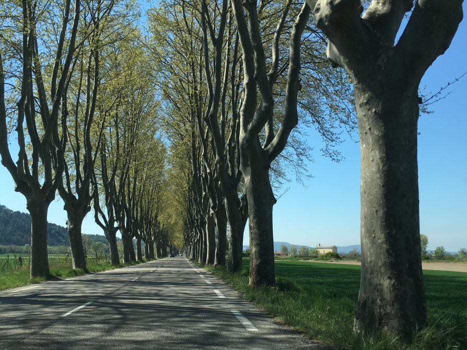 The magnificent avenue of Plane trees between Meyrargues and Peyrolles-en-Provence.